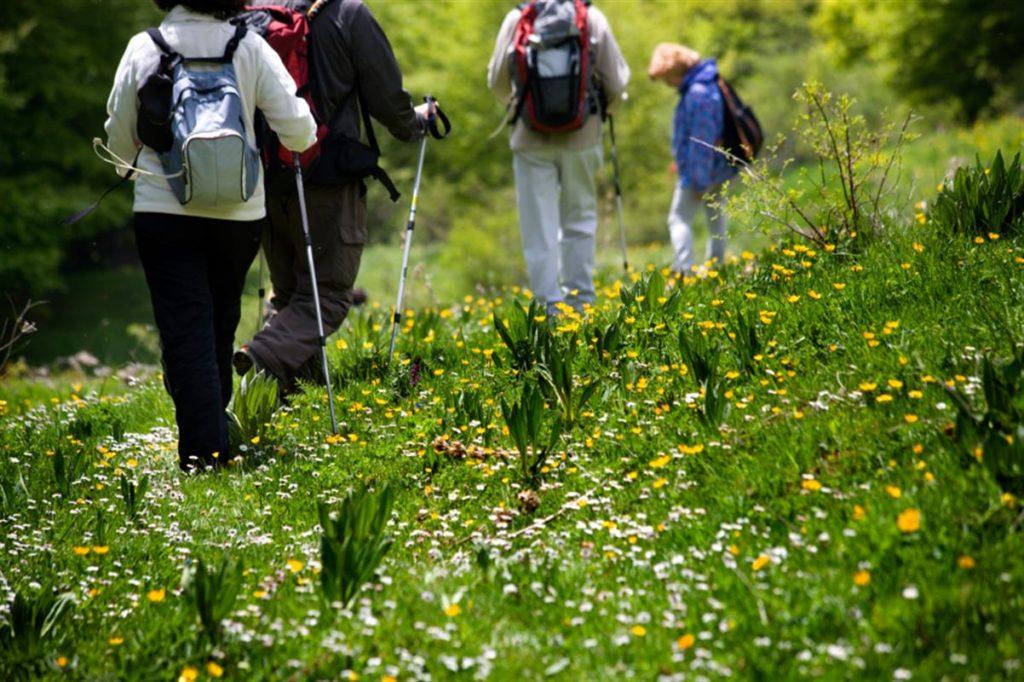 Des randonnées sont organisées autour d'Amélie les Bains tous les lundis et jeudis à tous les marcheurs. Voici les coordonnées pour vous renseigner ou réserver.